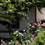 Mammis Apartments - Garden
